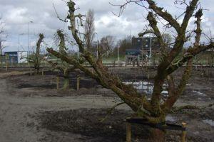 de-fruitbomen-gaan-al-uitlopen-in-park-laagveld