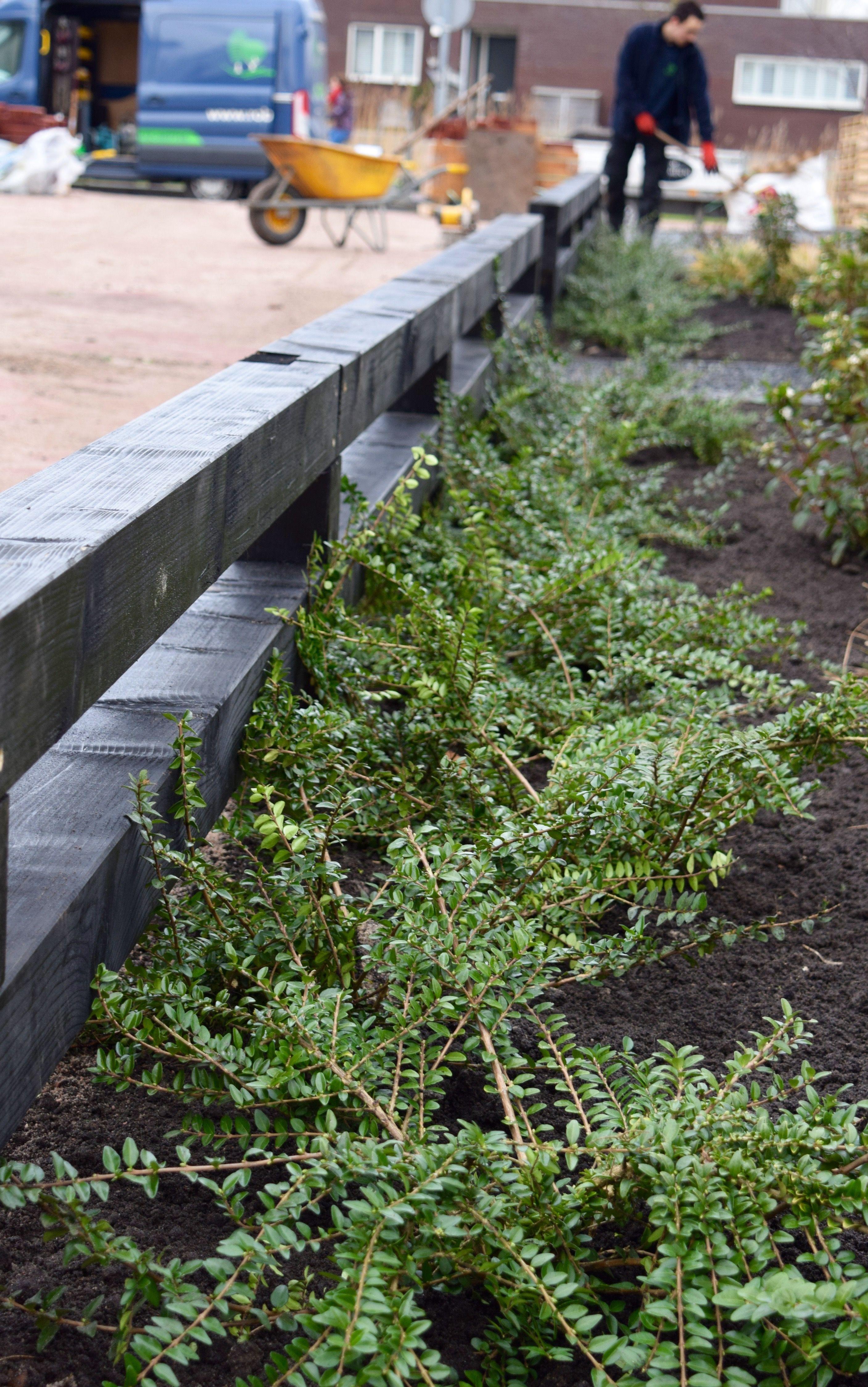 Aanleg en ontwerp tuin nieuw vennep for Rob eigen huis en tuin