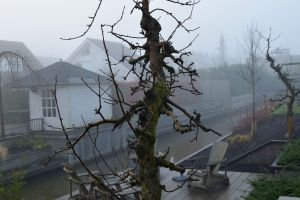 Oude-fruitboom-winter