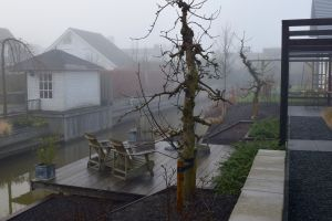 Oude-fuitboom-in-mist
